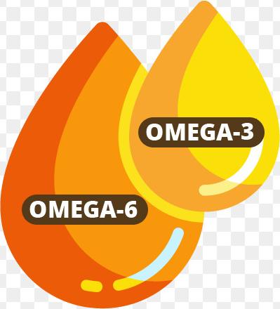 Omega 2 und 6
